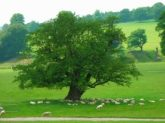 Chatsworth has outlying farms.. And has many sheep and deer too.