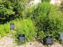 Herb garden in Picton Castle
